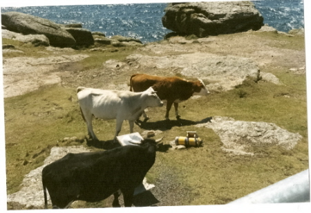 th cows wondering if they have any money for the collection box